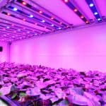 Grow Light By Click & Grow